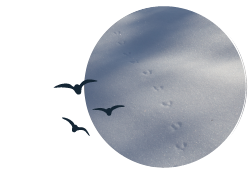 An illustration of birds flying over an image of animal tracks in the snow.