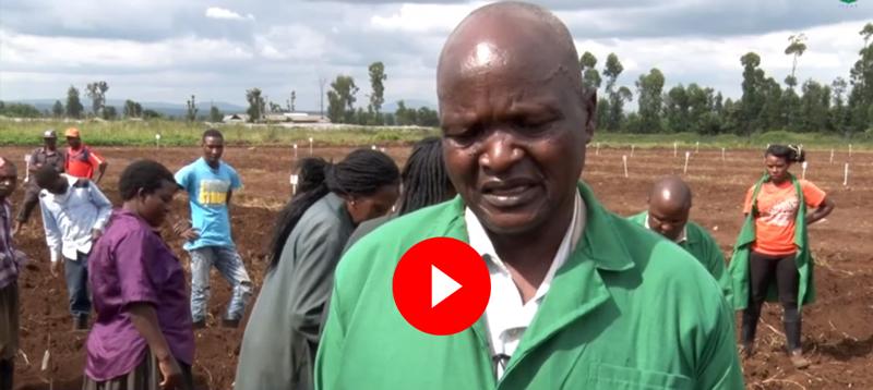 Finally, Bt Cotton in Kenyan Farmers Hands