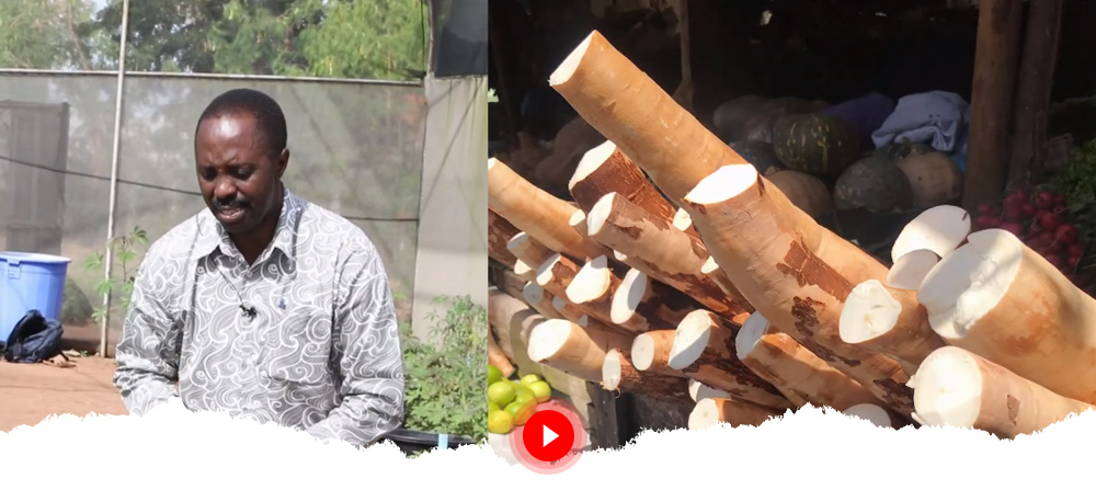 BEST CASSAVA: Building an Economically Sustainable Seed System for Cassava in Tanzania