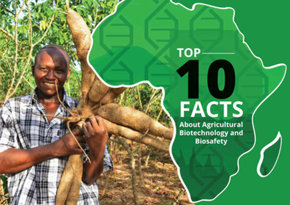 Top Ten Facts About Agri-biotech & Biosafety In Africa