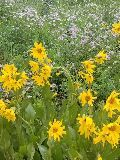 A field of yellow flowersDescription automatically generated with low confidence