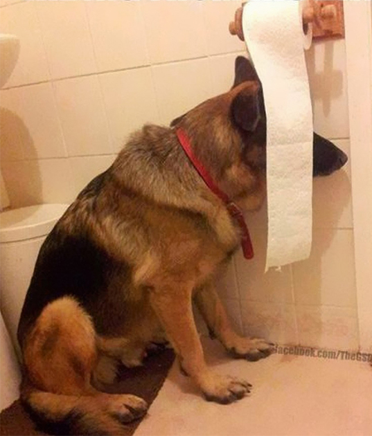 Dog hiding behind a strand of TP