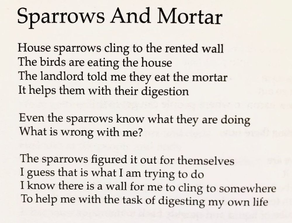 [Sparrows And Mortar by Rob Auton]