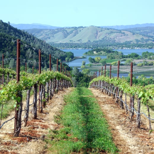 First-Time Visitor's Guide to Lake County Wine Country