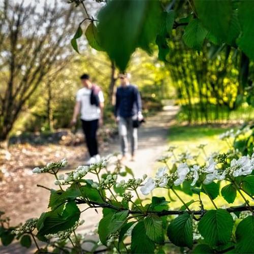 Wandelen in het park van Bokrijk