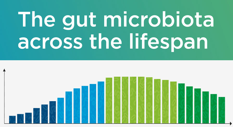 Discover how your gut microbiota evolves during your lifespan with this new infographic