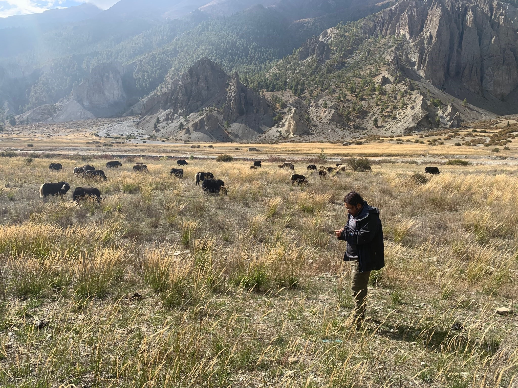 SilvaCarbon-supported field validation in an alpine meadow in Nepal