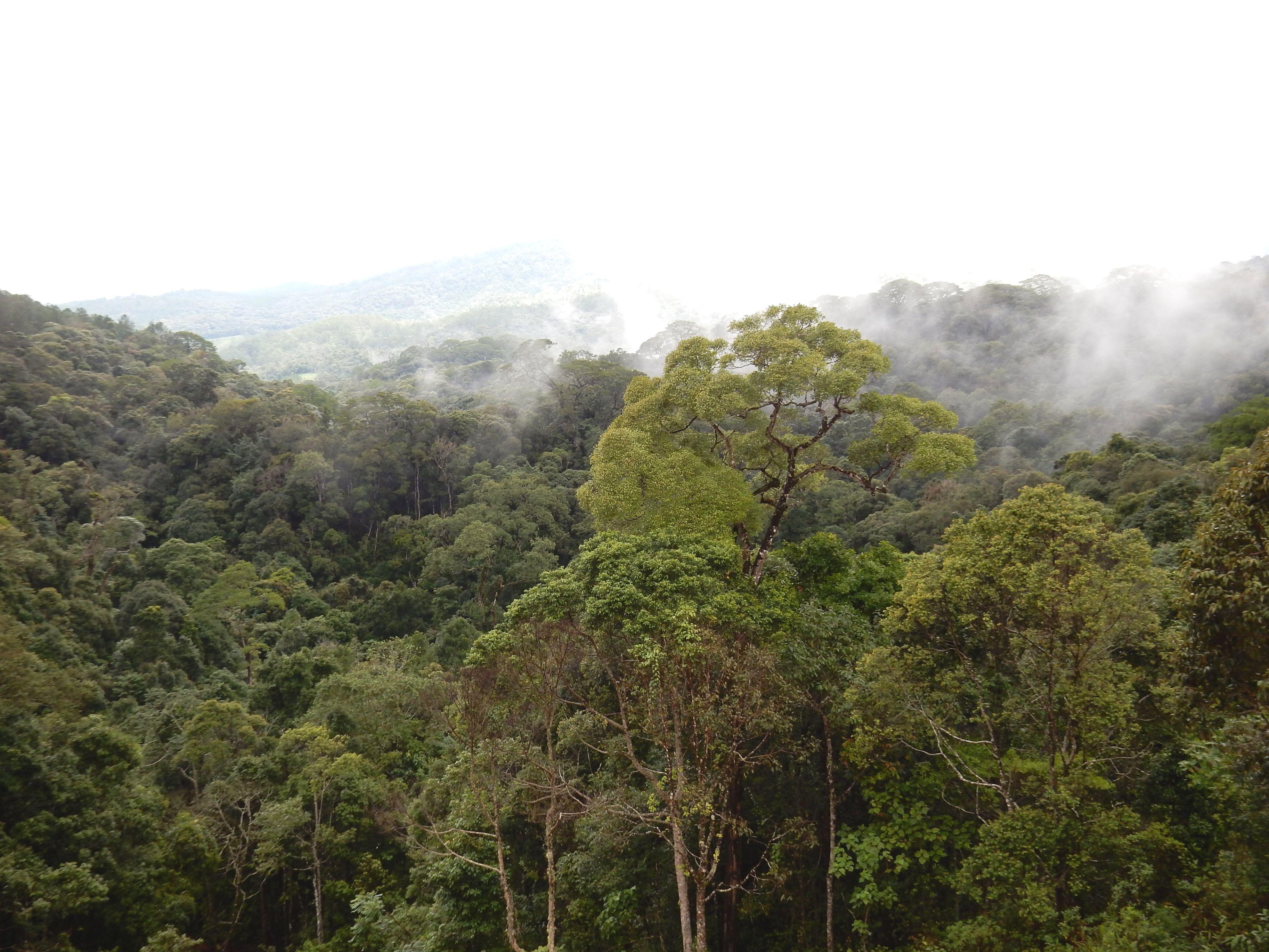 Vietnam forested landscape