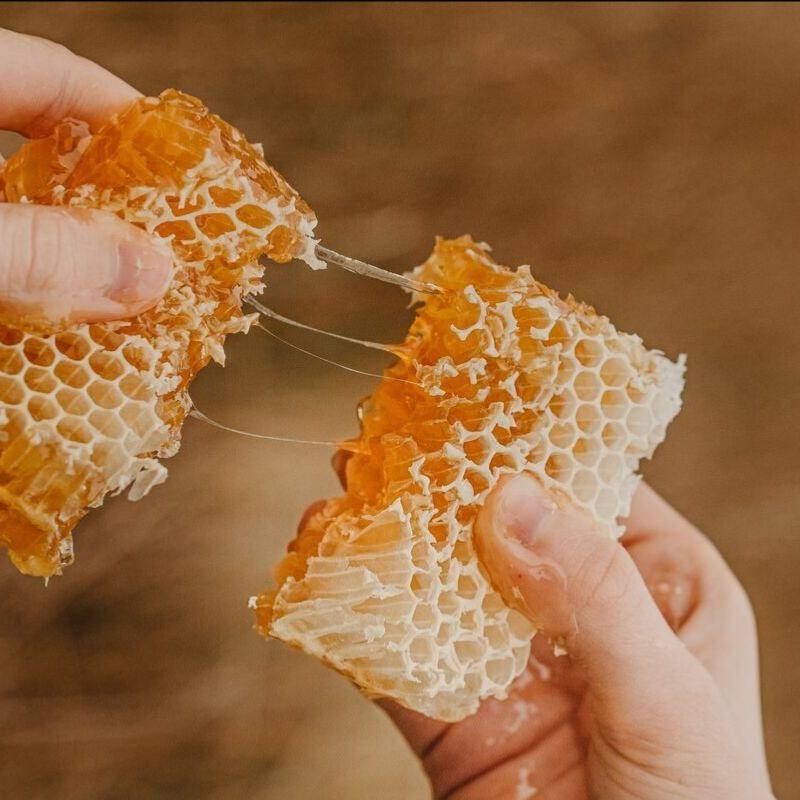 Honey comb in Slovenia