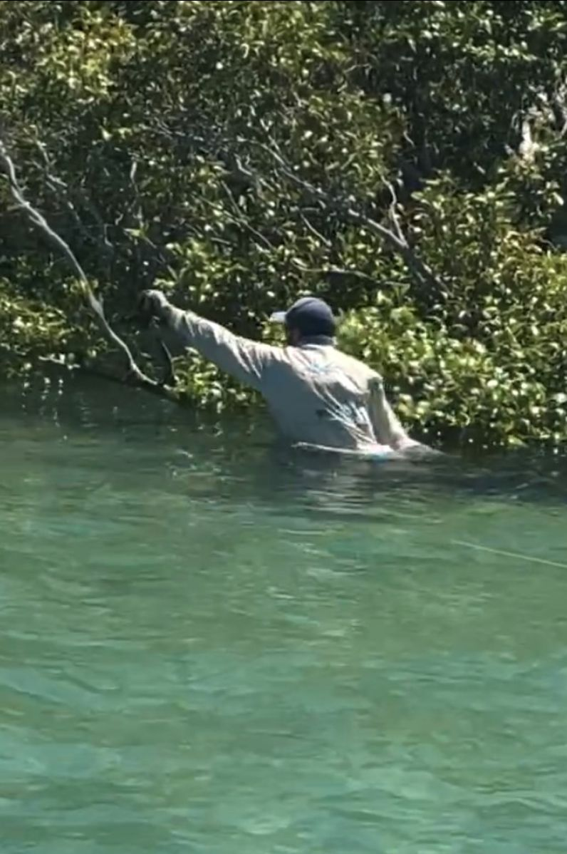 Chozz going in after a golden trevally that went around a mangrove