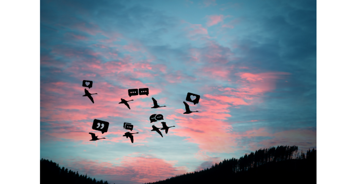 Picture of birds flying