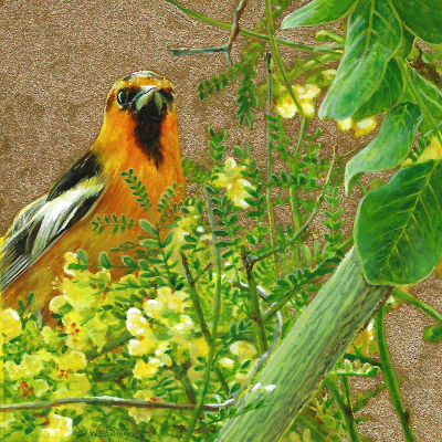 Bullock's Oriole painting by Wes Siegrist