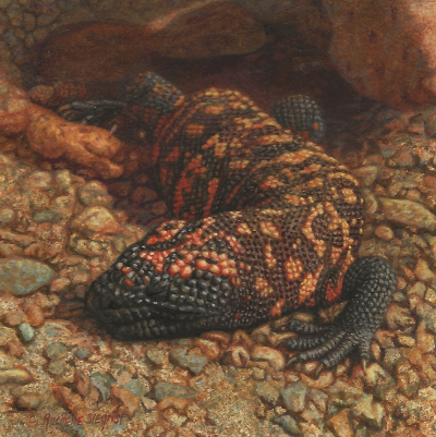A Sun Loving Monster painting of a Gila Monster by Rachelle Siegrist
