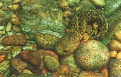 Hellbender painting by Rachelle Siegrist