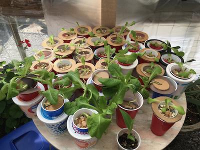 Siegrist hydroponic garden