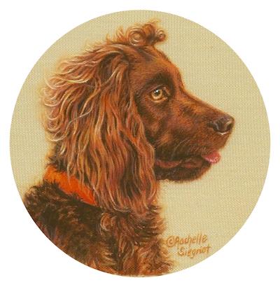 Boykin Spaniel painting by Rachelle Siegrist