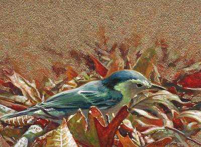 White-breasted Nuthatch painting by Wes Siegrist