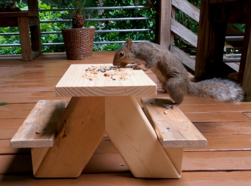 The new squirrel picnic table