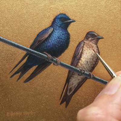 Purple Martins by Rachelle Siegrist