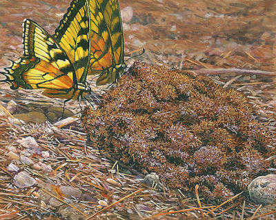 Butterfly Painting by Wes Siegrist