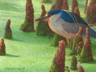 Among Cypress Knees