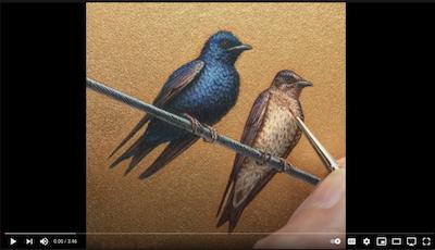 Watch a video of Rachelle Siegrist painting Purple Martins