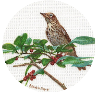wood thrush painting by Rachelle Siegrist