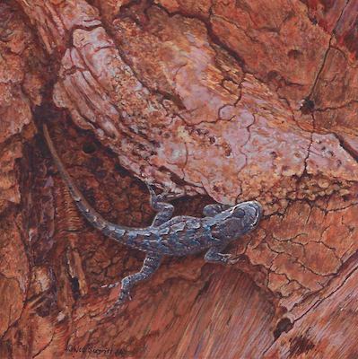 Southwestern Fence Lizard by Wes Siegrist