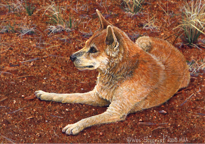 Dingo by Wes Siegrist