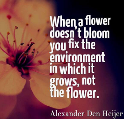 Flower doesn't bloom