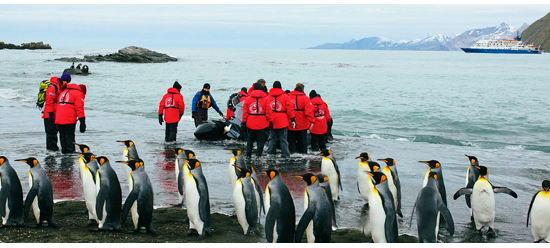 Poseidon Expeditions Partners With Oceanites, which Documents the Changing Environmental Impact on Penguins