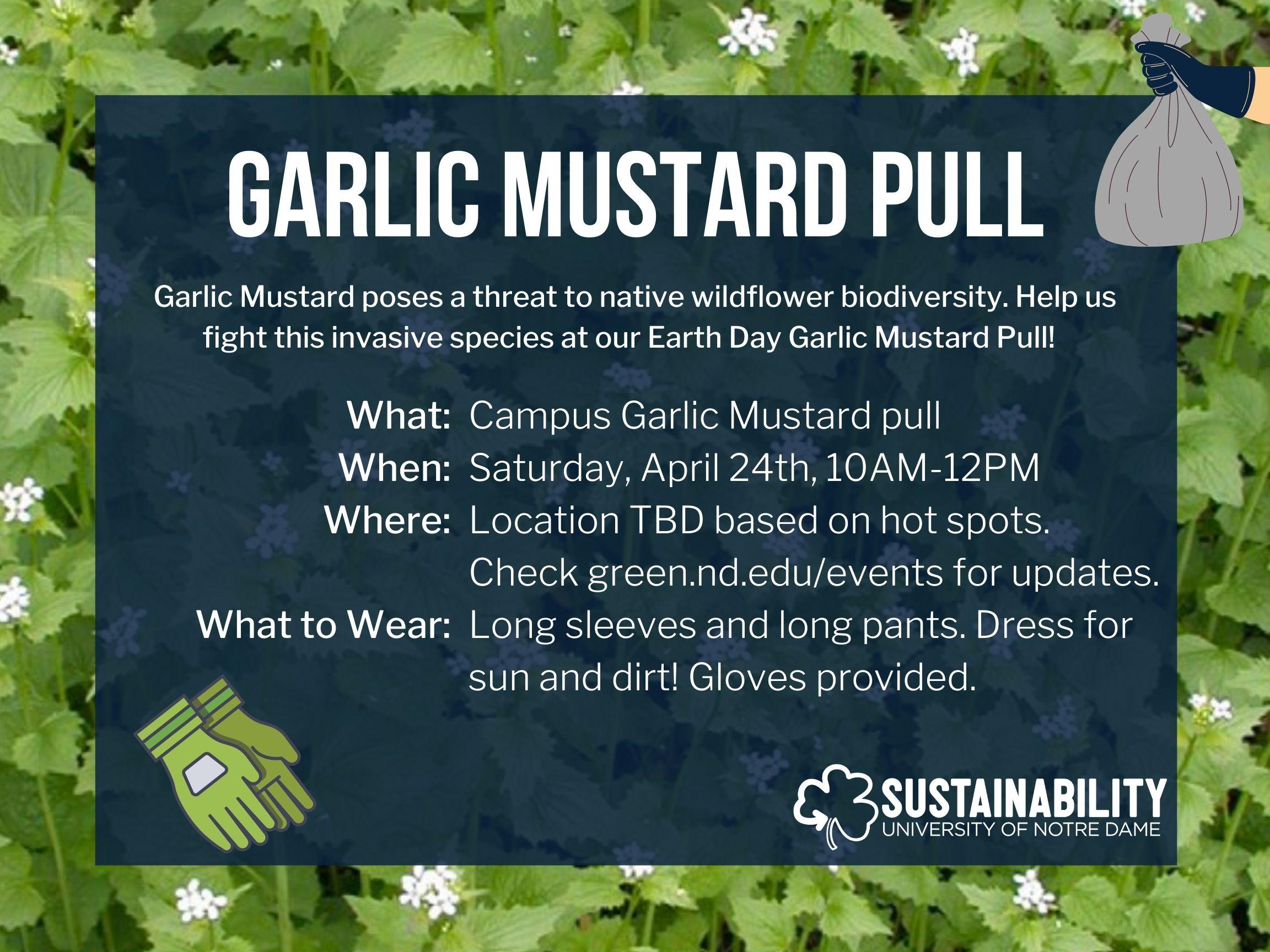 Garlic Mustard Pull