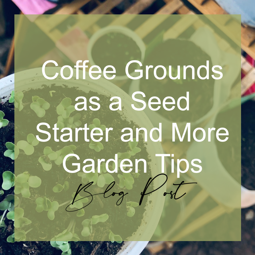 Coffee Grounds as a Seed Starter and More Garden Tips