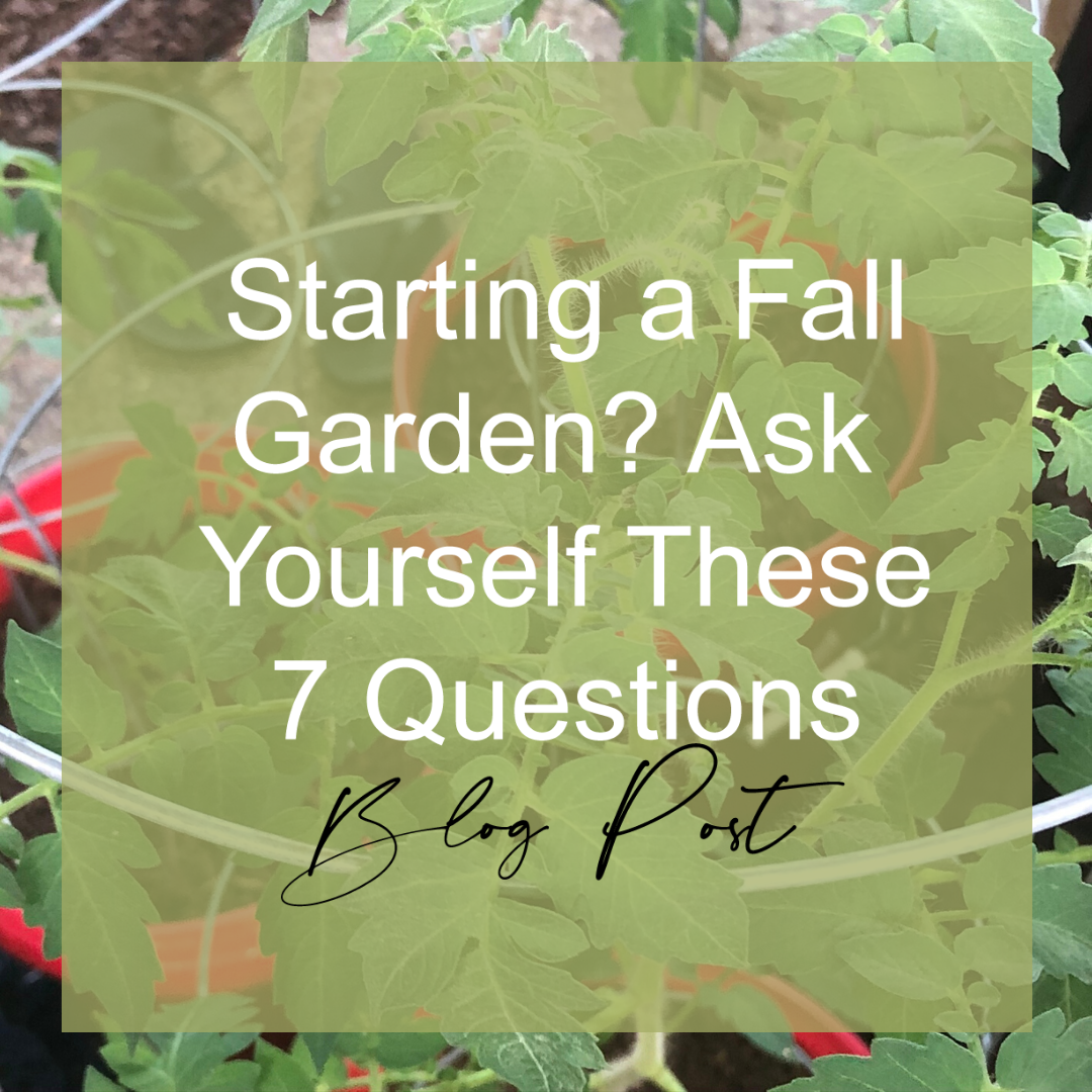 Thinking of starting a fall garden? Ask yourself these 7 newbie questions.
