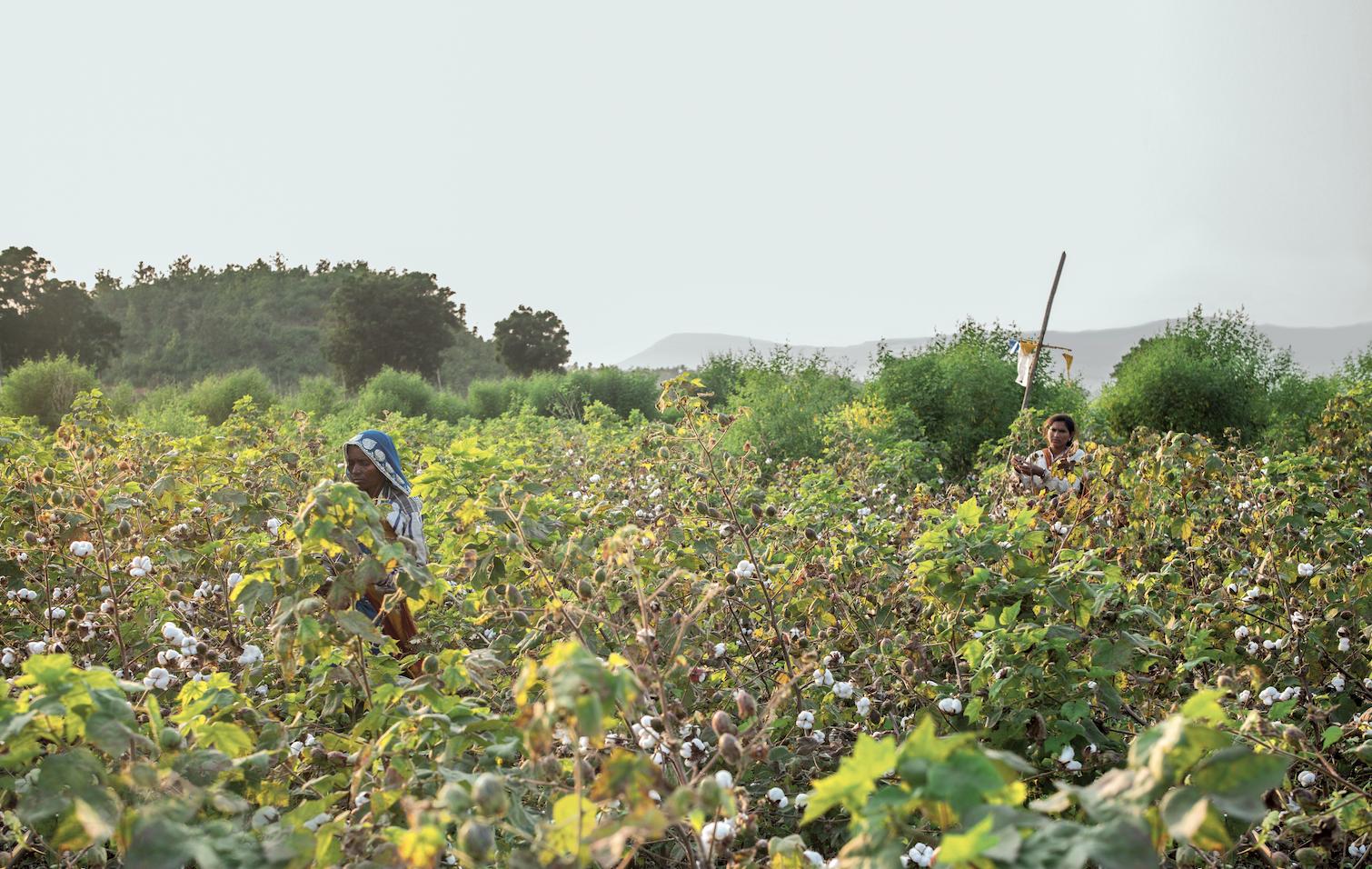 f4dff674 2f97 41c6 b1b5 656fc4d800f8 - Patagonia lance sa campagne sur l'agriculture biologique régénératrice