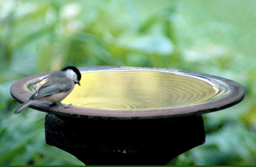 You must have some water in your backyard oasis!