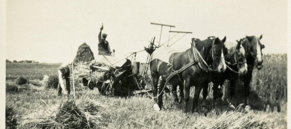 Werk in de tarwe, met paard en wagen.