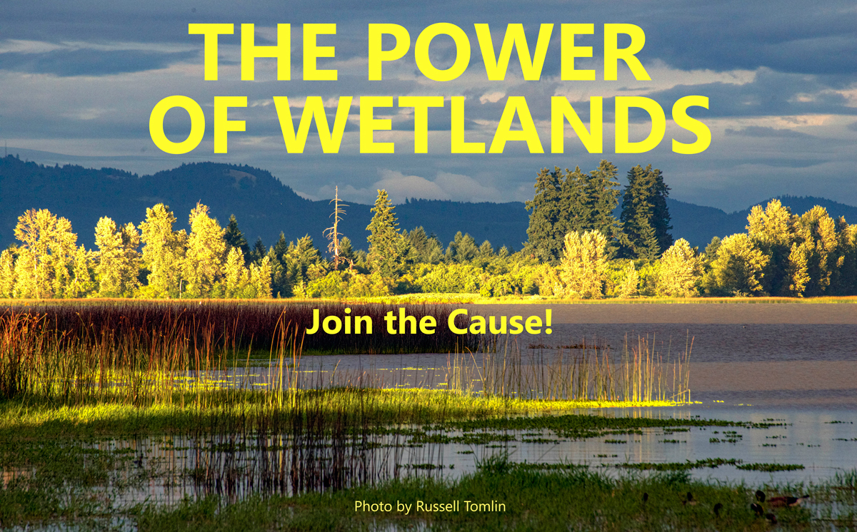 Power of Wetlands Masthead