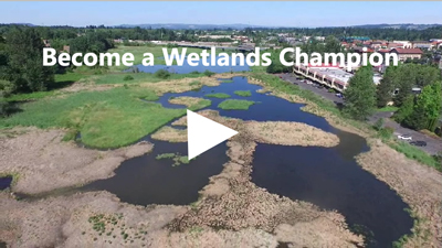 Wetlands offer refuge