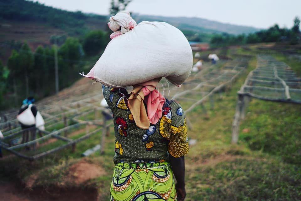 plantación Ruanda