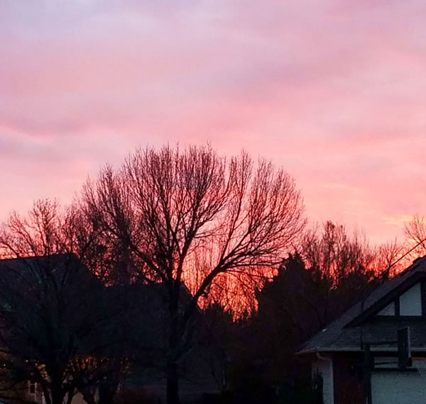 image: pink winter sunset