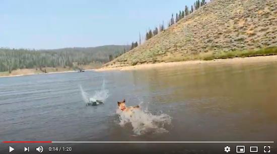 Cuya learns to swim!