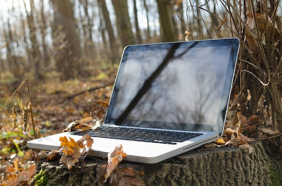 Laptop on a tree stump surrounded by leaves