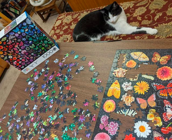 Tuxedo cat looking at a puzzle