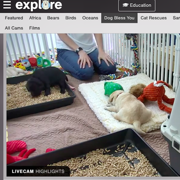View from puppy cam