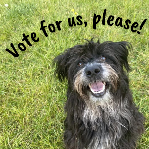 """A black dog with a white shaggy muzzle has her mouth open, eyes bright. She is in a field, and happy. Above her some text reads """"Vote for us, please!"""""""