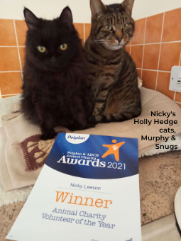 A black cat and a tabby cat both pose in front of Nicky's certificate.