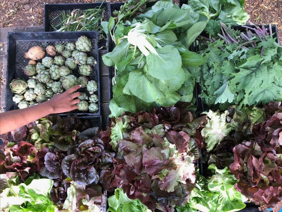 overhead photos of trays of various greens and artichokes; someone's forearm extends into the frame to select an artichoke