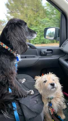 Peppa and Baxter