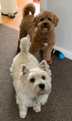 Bailey and Poppy